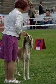 Tävling och träning med hundar